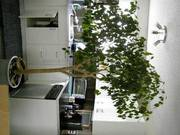Houseplants of various sizes and kinds $5 - $50