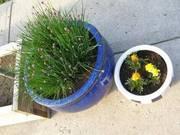 MOVING!!! Must sell perennial herb garden