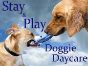 Play&Stay doggy daycare small dog boarding& grooming