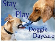 Stay&Play doggy daycare